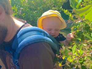 Finnian picking blueberries